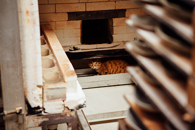 Katsufumi's cat, Dandelion, hiding behind the kiln where it's still warm after cooling down.