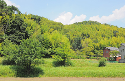 The studio of Misa Kumabuchi of Mushimegane Books in rural Nishinomiya, Hyogo Prefecture.