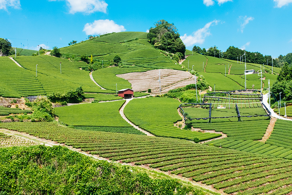 A View of the tea town of Wazuka in Kyoto, Japan